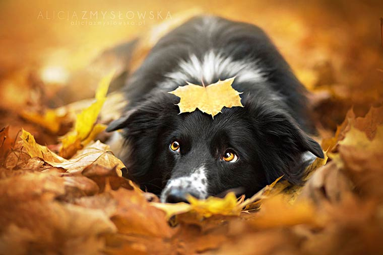 Alicja-Zmyslowska-dog-photography-2
