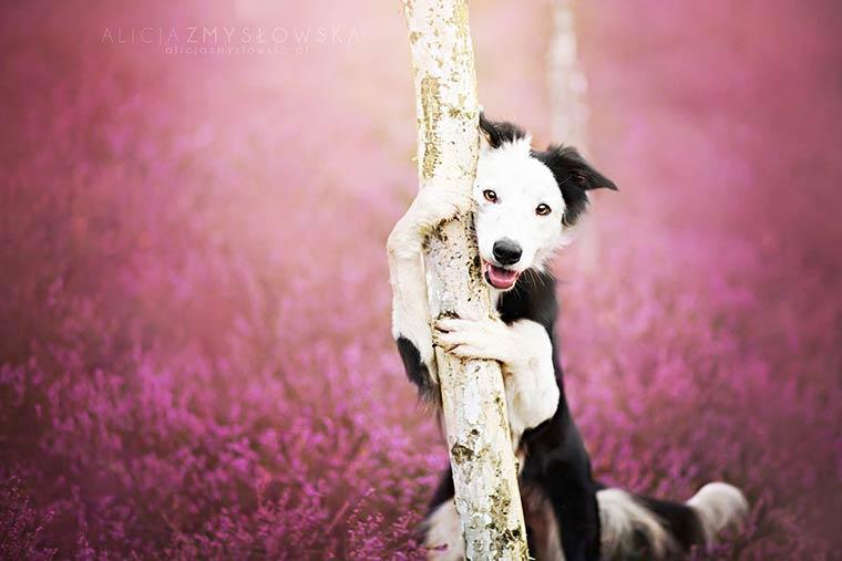 Alicja-Zmyslowska-dog-photography-9