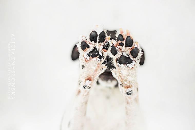 Portraits canins