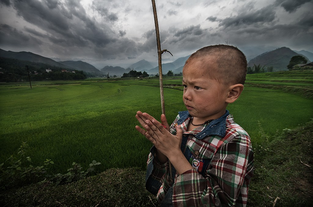 The wise child rice fields