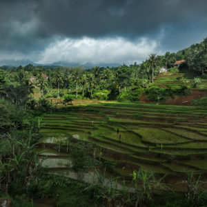 Java, ricefield, André Alessio, Graphylight, trees, arbres