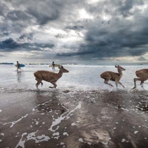 Java, Beach, deers, sea, André Alessio